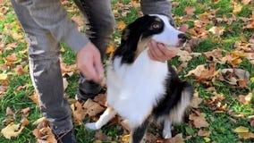 Άτομο που κτενίζει το σκυλί του φιλμ μικρού μήκους