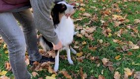 Άτομο που κτενίζει το σκυλί του απόθεμα βίντεο