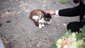 Άτομο που κτυπά τη γάτα απόθεμα βίντεο