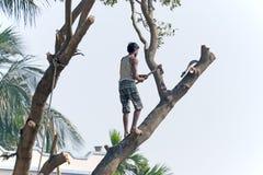 Άτομο που κόβει ένα δέντρο Στοκ εικόνα με δικαίωμα ελεύθερης χρήσης