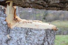 Άτομο που κόβει ένα κομμάτι του ξύλου με τη χρησιμοποίηση της μηχανής πριονιών στοκ εικόνες με δικαίωμα ελεύθερης χρήσης