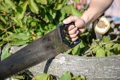 Άτομο που κόβει ένα ξύλινο δέντρο με ένα πριόνι χεριών σε πράσινο υπαίθρια Στοκ εικόνες με δικαίωμα ελεύθερης χρήσης
