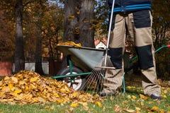 Άτομο που μαζεύει με τη τσουγκράνα τα φύλλα Στοκ Φωτογραφία