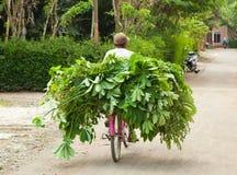 Άτομο που μεταφέρει τη συγκομιδή του σε ένα ποδήλατο, Ινδονησία στοκ φωτογραφίες