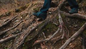 Άτομο που περπατά κατά μήκος του ρυπαμένου φύλλο δασικού πατώματος απόθεμα βίντεο