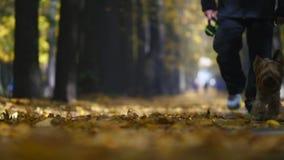 Άτομο που περπατά με το τεριέ του Γιορκσάιρ Σκυλί που στέκεται με το λουρί στη φθινοπωρινή πορεία απόθεμα βίντεο