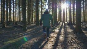 Άτομο που περπατά σε μια πορεία throug ένα κομψό δάσος απόθεμα βίντεο