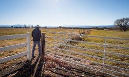 Άτομο που περπατά στο αγρόκτημα στο δυτικό Κολοράντο Στοκ εικόνα με δικαίωμα ελεύθερης χρήσης