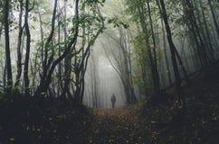 Άτομο που περπατά στο σκοτεινό δάσος αποκριών στοκ εικόνες