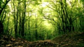 Άτομο που πηδά και που τρέχει μακρυά από τη κάμερα ι απόθεμα βίντεο
