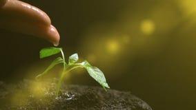 Άτομο που ποτίζει εγκαταστάσεις, σε αργή κίνηση, έννοια της ανάπτυξης της γεωργίας, οικολογία φιλμ μικρού μήκους