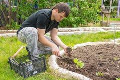 Άτομο που φυτεύει τα σπορόφυτα αγγουριών στο θερινό εξοχικό σπίτι τους Στοκ εικόνα με δικαίωμα ελεύθερης χρήσης