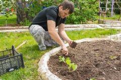 Άτομο που φυτεύει τα σπορόφυτα αγγουριών στο θερινό εξοχικό σπίτι τους Στοκ Φωτογραφίες