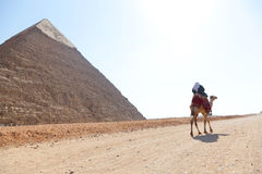 Άτομο στην καμήλα στις πυραμίδες Στοκ φωτογραφία με δικαίωμα ελεύθερης χρήσης