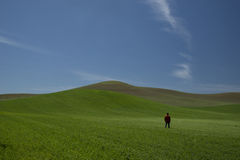 Άτομο στον τομέα στους λόφους Palouse Ουάσιγκτον Στοκ φωτογραφία με δικαίωμα ελεύθερης χρήσης