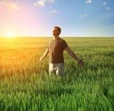 Άτομο στο πεδίο και το φως του ήλιου σίτου Στοκ Εικόνα
