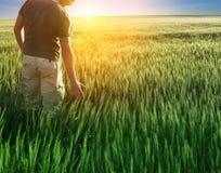 Άτομο στο πεδίο και το φως του ήλιου σίτου Στοκ Εικόνες