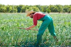 Άτομο της Farmer που εργάζεται στον οπωρώνα κρεμμυδιών με τη σκαπάνη Στοκ φωτογραφία με δικαίωμα ελεύθερης χρήσης