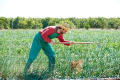 Άτομο της Farmer που εργάζεται στον οπωρώνα κρεμμυδιών με τη σκαπάνη Στοκ Εικόνες