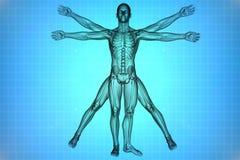 Άτομο Vitruvian με το DNA Στοκ Εικόνες