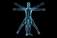Άτομο Vitruvian Στοκ εικόνα με δικαίωμα ελεύθερης χρήσης