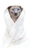 άτριχη πετσέτα γατών στοκ εικόνες