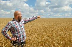 άτριχος γενειοφόρος αγρότης που δείχνει στον ουρανό επάνω από τους γεωργικούς τομείς σίτου στοκ εικόνες