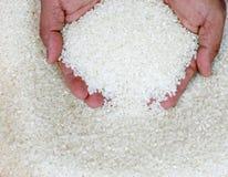 άφθονο ρύζι στοκ εικόνα με δικαίωμα ελεύθερης χρήσης