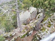 Άφιξη στο δάσος στοκ εικόνες