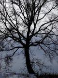 άφυλλος χειμώνας δέντρων στοκ φωτογραφίες με δικαίωμα ελεύθερης χρήσης