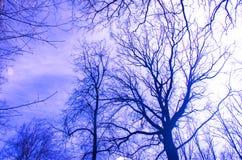Άφυλλες σκιαγραφίες δέντρων Στοκ Εικόνα
