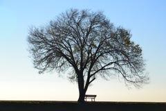 Άφυλλοι δέντρο και πάγκος Στοκ φωτογραφία με δικαίωμα ελεύθερης χρήσης
