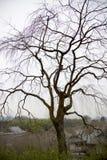 άφυλλο δέντρο Στοκ Φωτογραφία