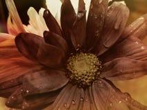 Άχρονα λουλούδια Στοκ Φωτογραφία