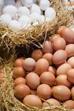 άχυρο αυγών Στοκ Εικόνες