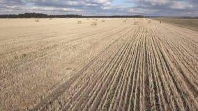 Άχυρο θυμωνιών χόρτου στον τομέα, μετά από να συγκομίσει το σίτο Αγροτικό τοπίο φθινοπώρου με τις θυμωνιές χόρτου Εναέριο μήκος σ φιλμ μικρού μήκους