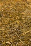 Άχυρο ρυζιού μετά το πέρας Στοκ Φωτογραφίες
