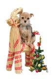 άχυρο santa ταράνδων s σκυλιών Στοκ φωτογραφία με δικαίωμα ελεύθερης χρήσης