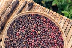 Άψητα οργανικά arabica φασόλια καφέ Τροπικό εξωτικό νησί του Μπαλί, Ινδονησία Αυθεντικός καφές του Μπαλί σε έναν καφέ Στοκ φωτογραφίες με δικαίωμα ελεύθερης χρήσης