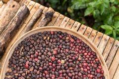 Άψητα οργανικά arabica φασόλια καφέ Τροπικό εξωτικό νησί του Μπαλί, Ινδονησία Αυθεντικός καφές του Μπαλί σε έναν καφέ Στοκ εικόνα με δικαίωμα ελεύθερης χρήσης