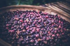 Άψητα οργανικά arabica φασόλια καφέ Τροπικό εξωτικό νησί του Μπαλί, Ινδονησία Αυθεντικός καφές του Μπαλί σε έναν καφέ Στοκ φωτογραφία με δικαίωμα ελεύθερης χρήσης