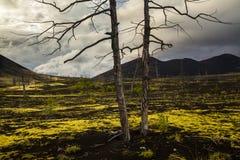 Άψυχα δέντρα στο νεκρό δάσος Στοκ Φωτογραφίες