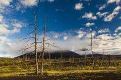 Άψυχα δέντρα στο νεκρό δάσος Στοκ εικόνες με δικαίωμα ελεύθερης χρήσης
