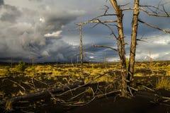 Άψυχα δέντρα στο νεκρό δάσος Στοκ Φωτογραφία