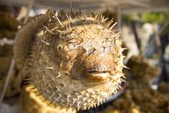 Άψυχα αποξηραμένα ψάρια καπνιστών που κρεμιούνται με το σχοινί στην αγορά ψαριών Στοκ Εικόνες