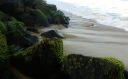 Άλγη θάλασσας στους βράχους με τα κύματα Στοκ Φωτογραφίες