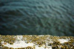 Άλγη και φόρμα χαλασμένο στον Α συμπαγή τοίχο και την όμορφη θάλασσα Στοκ Εικόνα