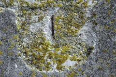 Άλγη και φόρμα χαλασμένο στον Α συμπαγή τοίχο Στοκ Εικόνα