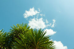 Άδεια και πολύ μπλε ουρανός φοινικών με το σύννεφο Στοκ Εικόνες