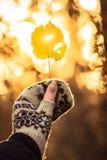Άδεια στο χέρι Στοκ Φωτογραφίες